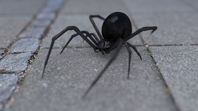 pavouk na chodníku