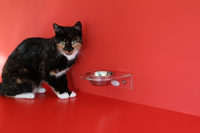 kočka u misky