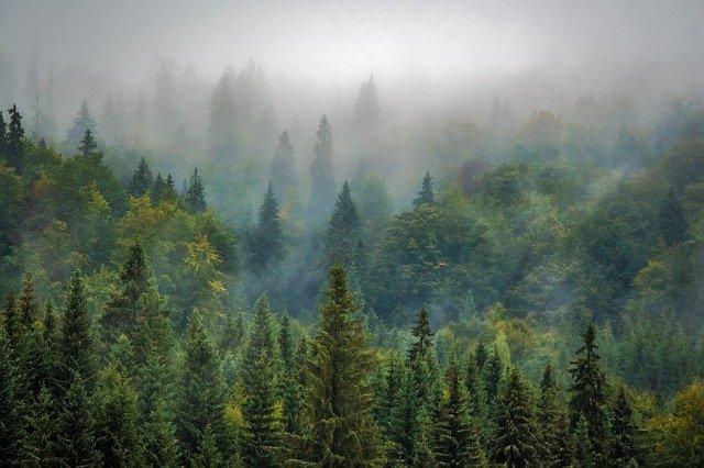 jehličnatý les.jpg